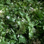 Fresh Coriander, Coconut and Green Garlic Base for Panchkutiyu Shaak