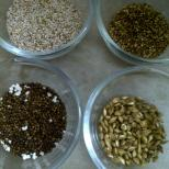 Popping Amaranth Seeds, Pearl Millet, Quinoa & Unhulled Barley